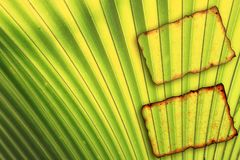 Paper notebook on leaves for text and background Royalty Free Stock Image