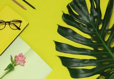 Paper notes, flower, green leaf on the yellow background royalty free stock image