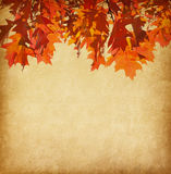 Paper with orange autumn leaves Royalty Free Stock Images