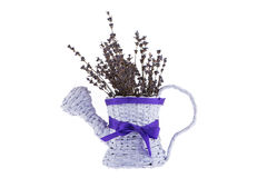 Paper pot with lavender. And purple bow on white background Stock Images