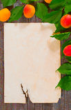 Paper for recipe. Paper prescription decorated branch of apricot Royalty Free Stock Images