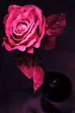 Paper rose. Stock Images