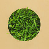 Paper with round hole with grass Stock Photos