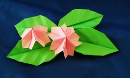Paper sakura Royalty Free Stock Image