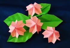 Paper sakura. Paper flower, or origami folded and shaped in sakura Stock Images