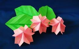 Paper sakura royalty free stock images