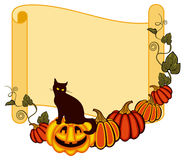 Paper scroll background and a black cat sitting up on the Halloween pumpkin. Stock Image