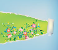Paper scroll background with flowers - abstract frame Stock Photography