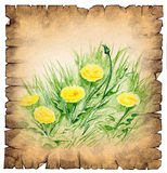Paper scroll with a drawing of dandelions royalty free illustration