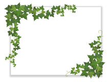 Paper sheet decorated ivy. White paper sheet decorated hanging ivy Stock Image