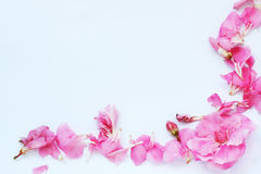 Paper sheet with pink oleander Stock Photography