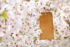 Paper tag in Spring with blossom cherry flower sakura Stock Photo