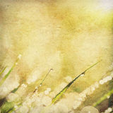Paper texture of bright morning dew Stock Image