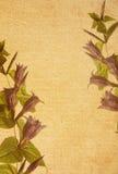 paper texturer för blomma Royaltyfri Fotografi