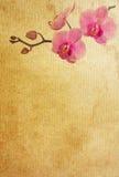 paper texturer för blomma Arkivbilder