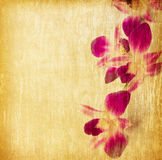 Paper textures. Purple orchid  on a grunge wood background. retro page Royalty Free Stock Images