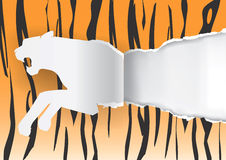 Paper Tiger ripping paper background Royalty Free Stock Photo