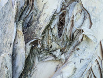 Paper tree bark with designs-5022241. Close-up of paper tree bark with curling layers on a  diagonal. The image is horizontal format and the colors are gray Royalty Free Stock Photography