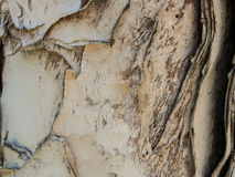 Paper tree bark with designs-5022249. Close-up of paper tree bark with split layers and design. The colors are beige and brown. Horizontal format is suitable for Royalty Free Stock Photo
