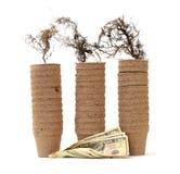Paper vase Stock Image