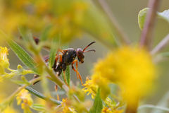 Paper Wasp Royalty Free Stock Photos