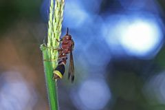Paper wasp on grass Royalty Free Stock Images