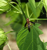 Paper wasp Royalty Free Stock Image