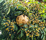 Paper wasp's nest royalty free stock photography