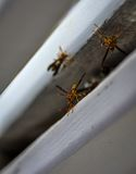 Paper wasp working the nest in Florida. USA. Paper wasp shot during my vacation Royalty Free Stock Photography