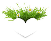 Paper white heart with flowers and grass Stock Image