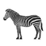 Papercut Zebra Recycled Paper Stock Photography