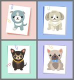 Papers with Dogs Images Set Vector Illustration. Papers with dogs images, set of puppies sitting calmly, pug with accessory, bowtie on neck, vector illustration Stock Photos