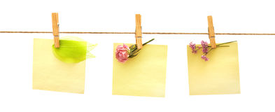 Papers and flowers with clothes peg on white Royalty Free Stock Images