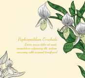 Paphiopedilum orchids card by hand drawing. Stock Photography
