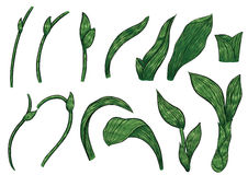 Paphiopedilum orchids leaves by hand drawing. Royalty Free Stock Photos