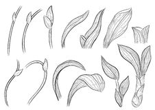 Paphiopedilum orchids leaves by hand drawing. Stock Photos