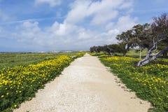 Paphos Archeologiczny park - Cypr Obraz Royalty Free