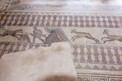 Paphos Archeologiczny park - Cypr Zdjęcie Royalty Free