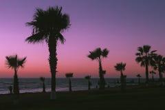 Paphos strand Härlig solnedgång på bakgrunden av palmträd royaltyfri fotografi