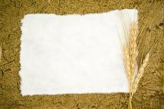 Papier blanc avec du blé d'oreilles image stock
