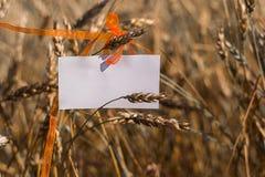 Papier blanc dans les oreilles du blé image stock