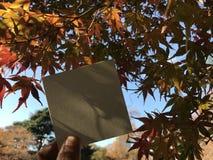 Papier blanc de prises d'homme avec de belles feuilles oranges d'érable et arbres colorés Image stock