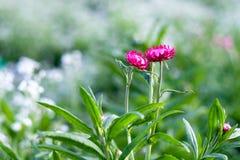 Papier de fleur Photo stock