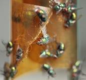 Papier de mouche avec des mouches coincées Photographie stock libre de droits