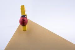 Papier de note avec le papier avec l'icône de coccinelle Photographie stock libre de droits