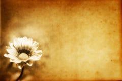 Papier grunge de fleur Image libre de droits