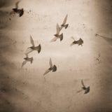 Papier grunge volant de groupe de colombe vieux Image stock