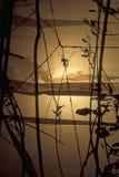 Papier jaune abstrait Image stock