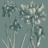 Papier peint classique avec une configuration de fleur. Photographie stock