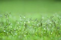 Papier peint d'herbe verte Photographie stock